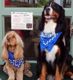 san diego puppy adoption pet adoption at shades san diego ca news