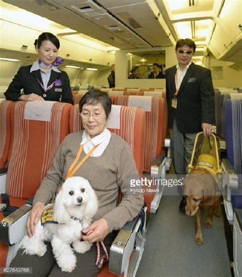 cani in cabina aereo mai pi 249 cani in stiva l aereo giapponese li trasporta