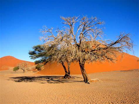 gambar pemandangan gurun pasir