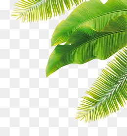 Fall Plants by Banana Leaves Png Images Vectors And Psd Files Free