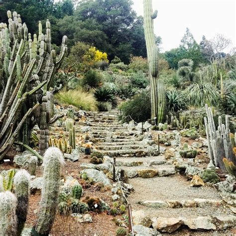 uc botanical gardens