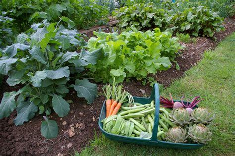 easy garden vegetables triyae easy backyard vegetable garden ideas