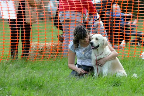how to comfort dogs during fireworks fireworks season is here here s how to keep your pets
