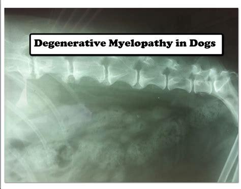 degenerative myelopathy in pugs degenerative myelopathy in dogs veterinary secrets with dr andrew jones dvm
