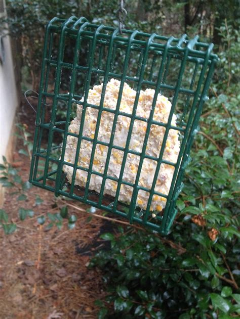 how to make homemade bird suet walter reeves the