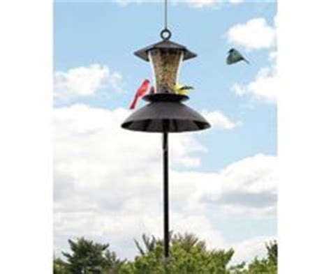 1000 images about anti squirrel bird feeders on pinterest