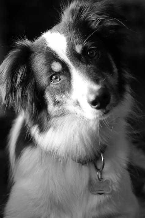 black and white dog in black and white positively peachy