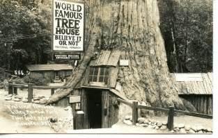 Chandelier Redwood Tree Fraternal Monarch Redwood Tree House California Rppc