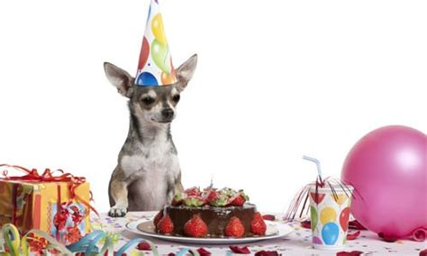 Birthday Surprises For Your Pet 8 surprises for your pet s birthday