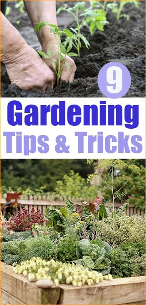 Vegetable Garden Tips And Tricks 9 Gardening Tips And Tricks Great Information On Planting