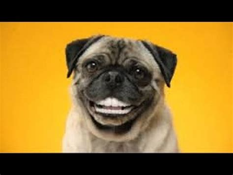 tell me about pugs my mlg pro pugs