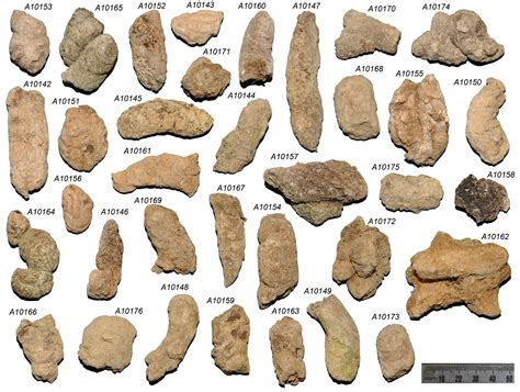 Human Stool Types by Paleoecology And A Pair The Integrative