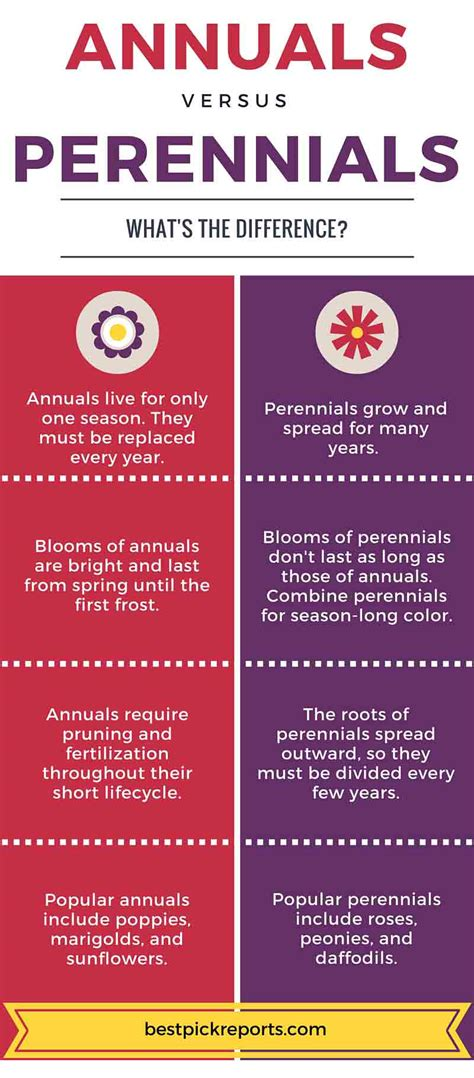 difference between annuals and perennials infographic