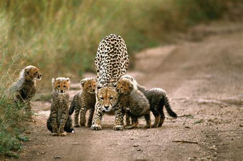 best wildlife photography wildlife photography at its best wildlife photography