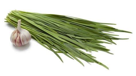 garlic chives  flat leafed chive   distinct garlic