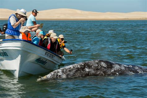 Top 10 Things To Do In Cabo San Lucas 20 Activities To Do In L A That Ll Help Bring