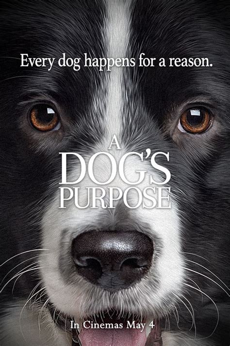 a s purpose on netflix 17 best ideas about border collie humor on humor pictures of