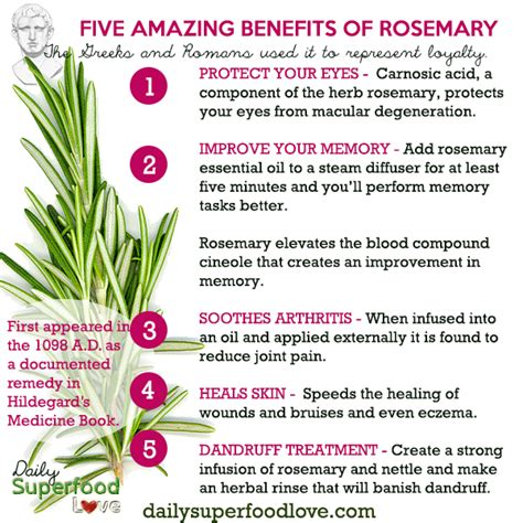 Medicinalcosmetic Uses Of Rosemary by Five Amazing Benefits Of Rosemary Herbs Benefit And