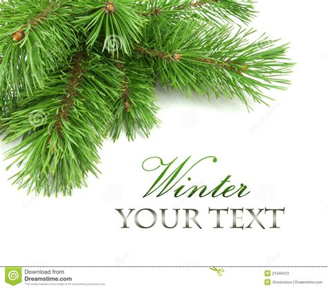border  christmas tree branches stock  image