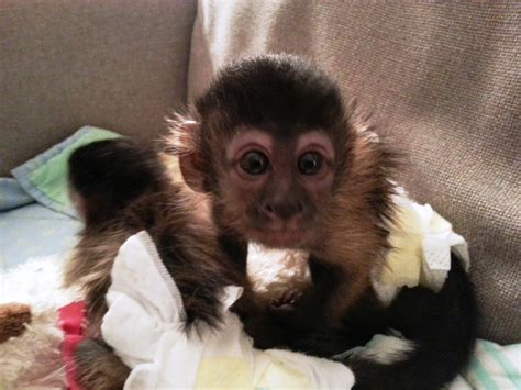 pet monkey images reverse search