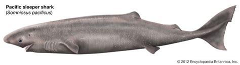 1000 images about washington marine fish species on