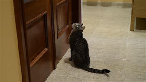 Waiting At Door by Terrier Food Stock Footage 7447342
