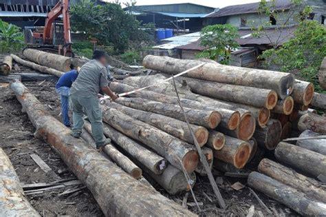 Gergaji Di Malaysia sprm beku akaun rm700 juta sita 1 785 balak di sarawak mrm