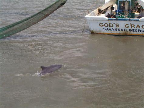 shrimp boat tour hilton head sc timeshare travels waterside by spinnaker hilton head is