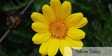 s3 wallpaper flower name pictures of yellow flowers and their names impremedia net