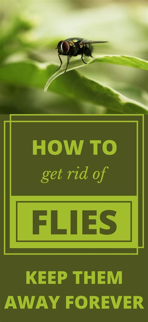 how to get rid of flies in your backyard 1000 best cleaning tips 101 images on pinterest how to