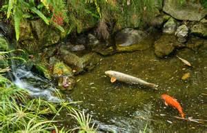 file fish pond at the gibraltar botanic gardens jpg