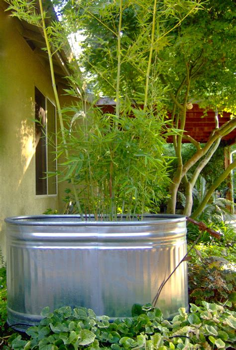 Bamboo Planter Ideas by Bamboo Cool Container Ideas For Bamboo