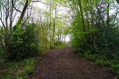 trees burnley walks in lancashire burnley arts trail singing tree