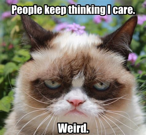 Thinking Cat Meme - grumpy cat people keep thinking i care weird cats