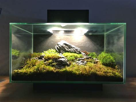 fluval edge moss terrarium album  comments terrariums