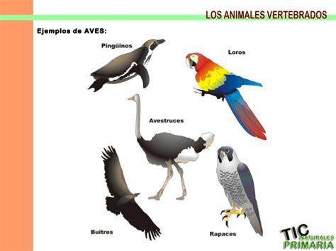 imagenes de animales vertebrados aves vertebrados