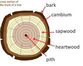 parts of a tree worksheet abitlikethis