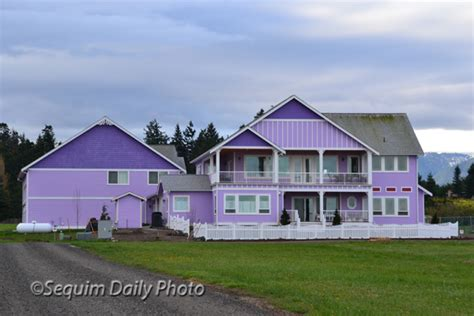 house of color purple houses 171 sequim daily photo