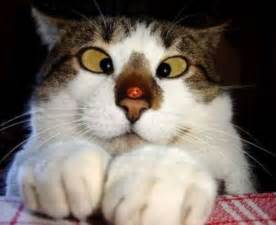 Funny cat faces cartoon images wallpapers pictures funny cat faces