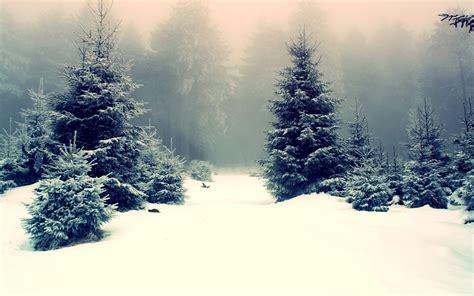 snowy fir trees wallpaper 1034391