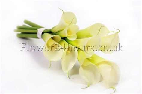 top 28 calla care uk pink calla lily care image search results pack of three zantedeschia