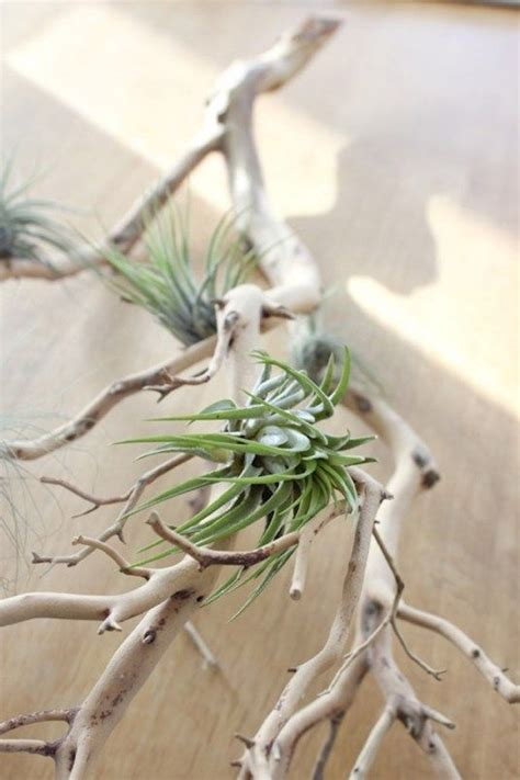 Plante Sans Entretien by Plante Sans Entretien Superb Plante Couvre Sol Sans