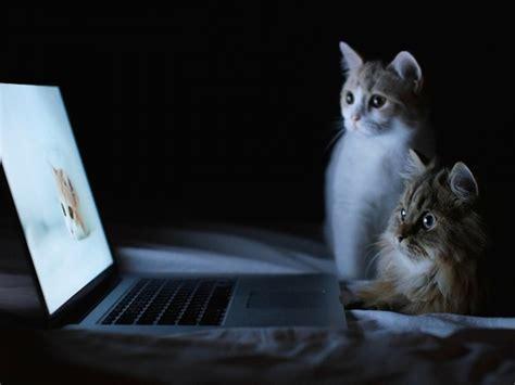 cat wallpaper for laptop computer cats wallpaper free cute animal downloads