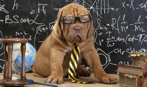 math puppy can math help you choose the ideal