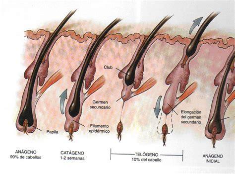 acne en el cuero cabelludo tratamientos para evitar la ca 237 da cabello cl 237 nica