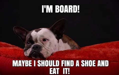 Dog Logic Meme - grumpy dog and more dog memes barking laughs
