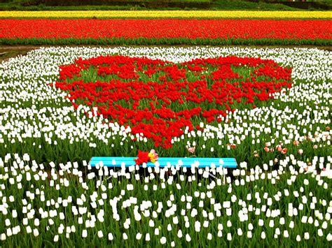 prato con fiori sfondi desktop prato di fiori