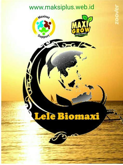 Bibit Lele Semarang biomaksi budidaya lele bioflog 081385840626 maksiplus