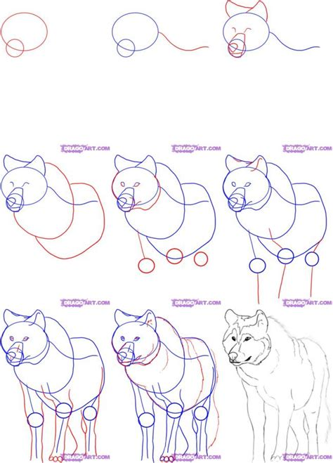 how to sketch how to draw a wolf