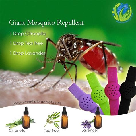 scents to keep mosquitoes away 17 best images about eo bug spray bites on bug spray recipe ticks and distilled